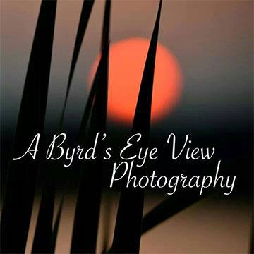 A Byrd's Eve View Photography